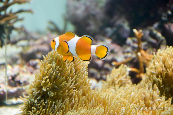葛西臨海水族園きれいな魚1