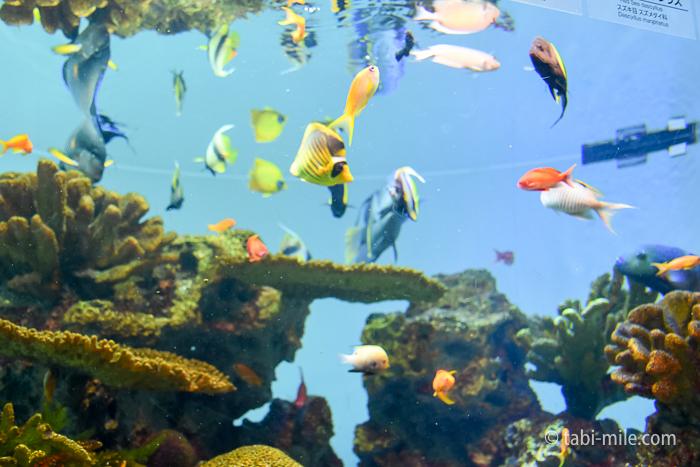 葛西臨海水族園きれいな魚3