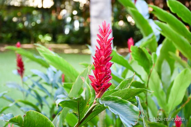 ロイヤルハワイアンホテルココナッツグローブ植物
