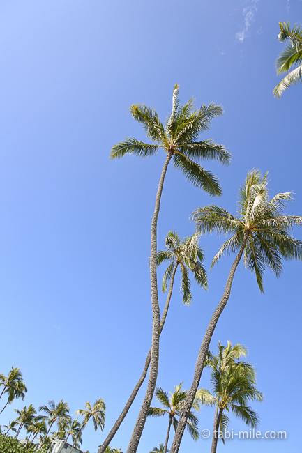 カハラホテルビーチ椰子の木