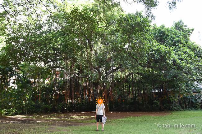 ロイヤルハワイアンホテルココナッツグローブ大きな木