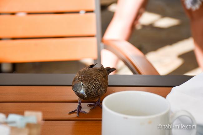 カハラホテル朝食ビュッフェテラス席鳥