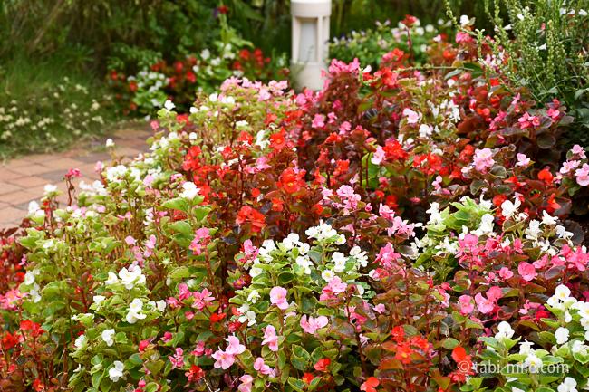シェラトングランデ東京ベイガーデン赤い花