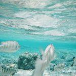FUJIFILM レンズ付フイルム フジカラー 写ルンです 防水タイプ 27枚撮り 11