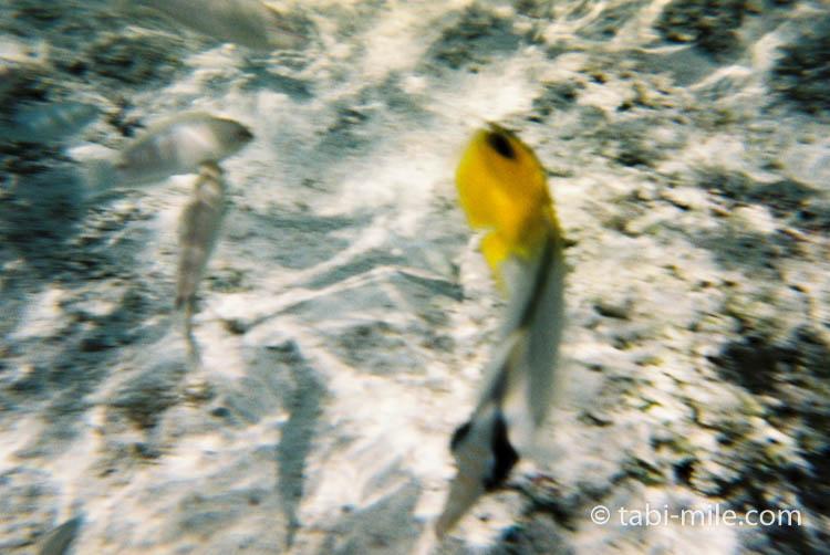 FUJIFILM レンズ付フイルム フジカラー 写ルンです 防水タイプ 27枚撮り 09
