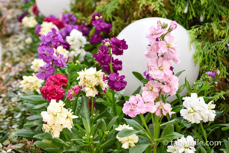 ホテルオークラ東京ベイ 中庭 花壇