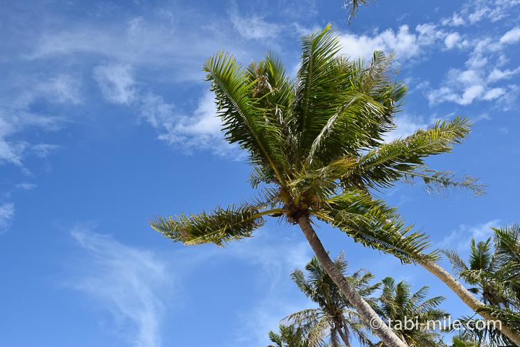 グアム旅行 ココパームガーデンビーチ ヤシの木