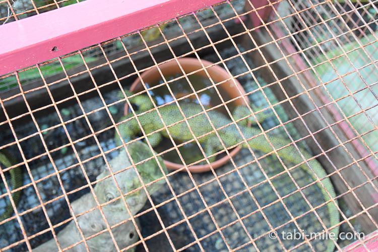 グアム旅行 ココパームガーデンビーチ 爬虫類