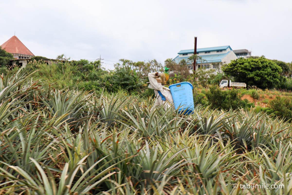 ナゴパイナップルパーク、パイン畑とかかし